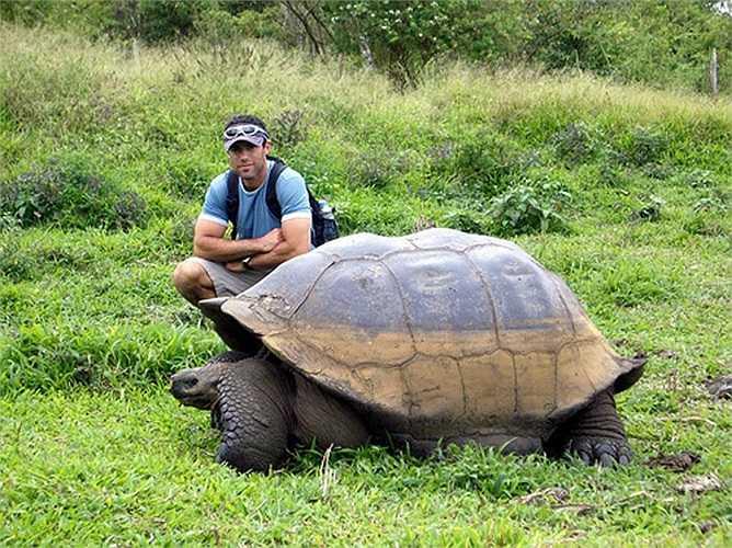 Rùa được xem là động vật có xương sống sống lâu nhất trên trái đất. Một con rùa Galápagos chết vì suy tim ở tuổi 175 vào năm 2006. Harriet được coi là đại diện sống sót cuối cùng trong hành trình sử thi của Darwin trên tàu HMS Beagle.