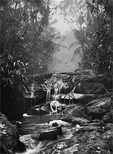 Dòng sông nơi người Yanomami sinh sống đã bị nhiều kẻ đi đãi vàng tìm đến