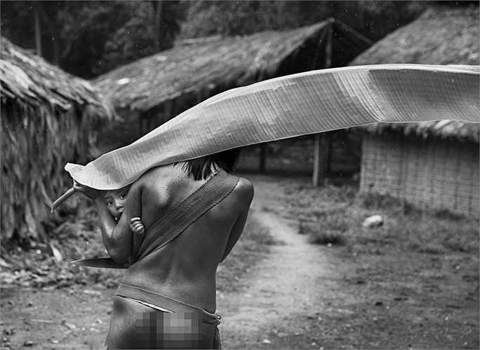 Người Yanomami dùng lá chuối làm ô