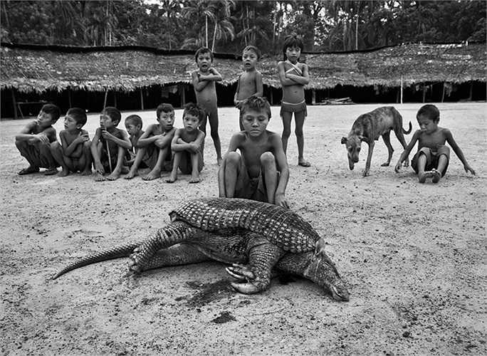 Con tê tê khổng lồ mà các thổ dân săn được, nặng đến 65kg, đây cũng là loài được chọn làm linh vật cho World Cup 2014 vừa qua