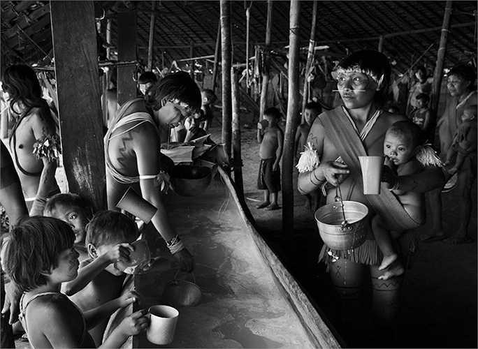 Người dân Yanomami uống loại rượu lên men từ hoa quả bên trong một thân cây rỗng