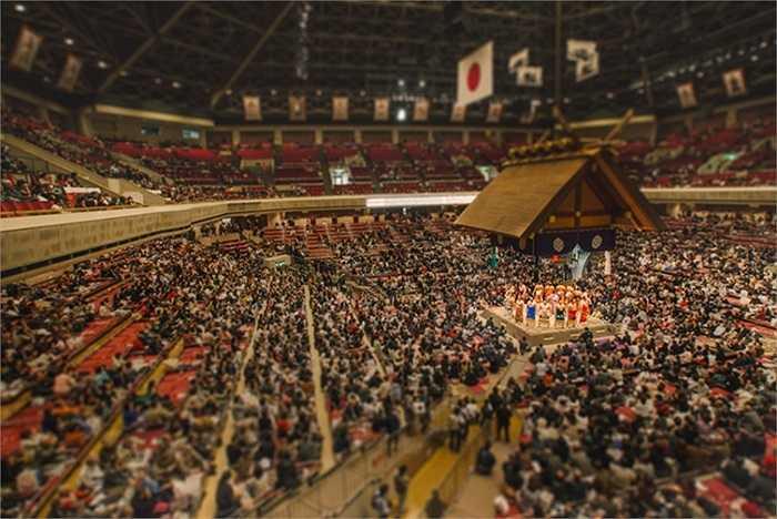 Các đô vật sumo và khán giả như món đồ chơi của trẻ em