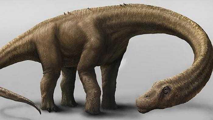 Các nhà khảo cổ chưa từng khai quật được bộ xương khủng long nào hoàn chỉnh như của Dreadnoughtusvới hơn 70% xương, trừ phần đầu. Điều này giúp họ hiểu thêm về những loài động vật vĩ đại nhất từng xuất hiện trên Trái Đất.