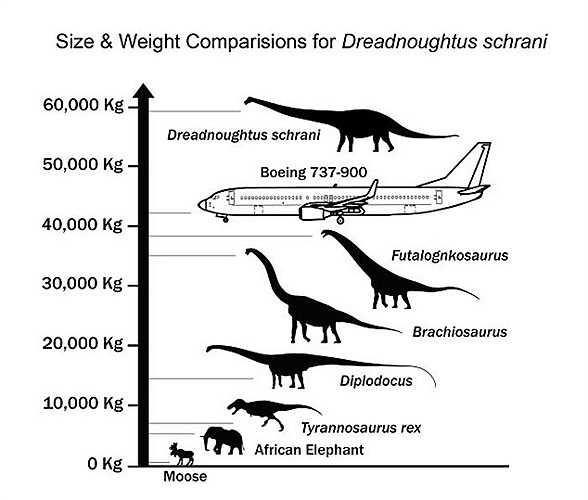 Tiến sĩ Kenneth Lacovara, trợ giảng tại Khoa Nghệ thuật - Khoa học, Đại học Drexel, đã phát hiện ra hóa thạch khủng long tại Nam Patagonia (Argentina). Dreadnoughtus nặng bằng 12 con voi châu Phi và gấp 7 lần 1 con khủng long bạo chúa thông thường.