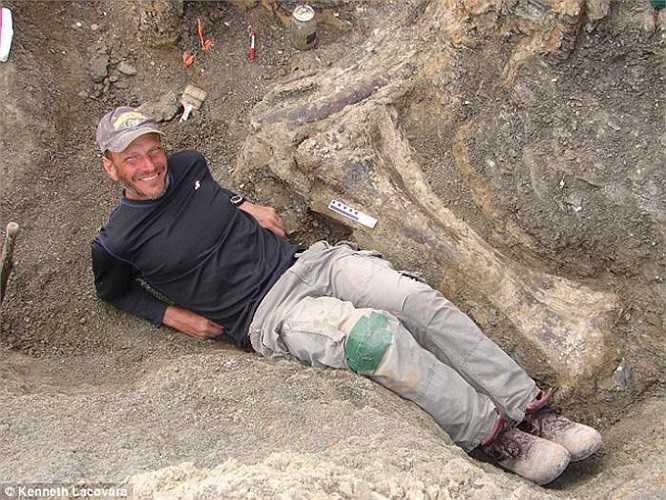 Hóa thạch Dreadnoughtus gồm chiếc đuôi dài 9m, đốt sống cổ có đường kính gần 1m, xương vai, rất nhiều xương sườn, ngón chân, một móng vuốt, một phần của bộ hàm và một chiếc răng. Trong ảnh, tiến sĩ Lacovara chụp với phần xương chày phải.