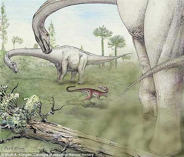 Minh họa cho thấy hình ảnh so sánh giữa 2 con khủng long Dreadnoughtus và 1 con ăn thịt. Dreadnoughtus là loài ăn cỏ và chúng duy trì sở thích ăn uống bất tận để duy trì cơ thể quá khổ của mình.