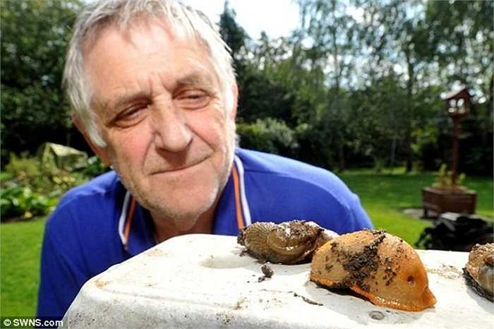Ông Cornell, một nông dân ở Anh, cho biết: 'Tôi chưa từng thấy loài sên nào lớn như vậy. Chất nhờn của chúng tạo ra những vết trơn trượt trên các con đường. Cách duy nhất để giết chết loài này là cắt chúng thành nhiều mảnh'. Ảnh: SWNS