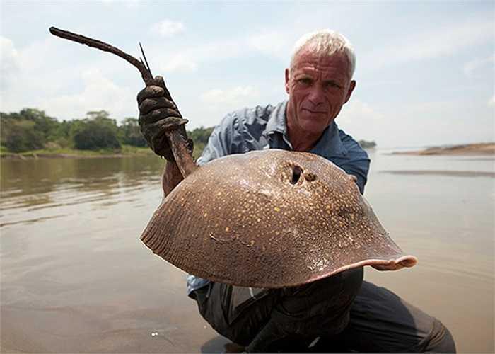 Cá đuối gai độc bị Wade tóm gọn