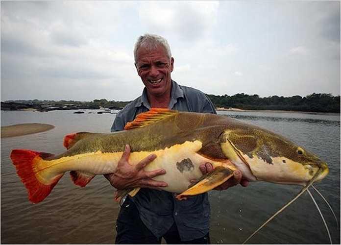 Wade và con cá trê đuôi đỏ câu được ở sông Araguaia, Brazil