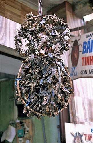 Xác cà cuống được xâu thành dây treo ngoài cửa hàng, khi khách mua được gỡ xuống và gói vào giấy cẩn thận.