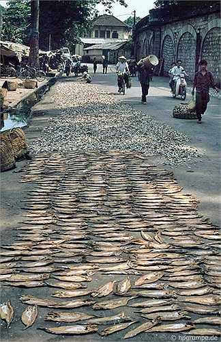 Ở một đoạn phố Phùng Hưng, nhà nhiếp ảnh người Đức còn thấy cá khô phơi kín mặt đường.