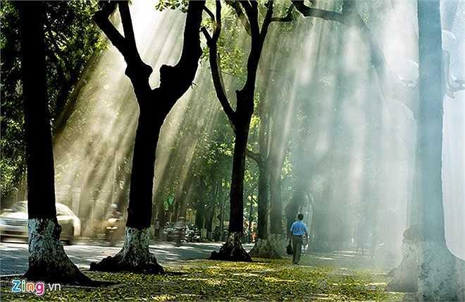 Hà Nội còn làm lay động lòng người với những con đường có thảm lá như Phan Đình Phùng, Hoàng Diệu, Hoàng Hoa Thám... Vào mỗi buổi bình minh, các tia nắng tràn xuống xuyên qua các khe lá tạo nên một khung cảnh rất nên thơ.