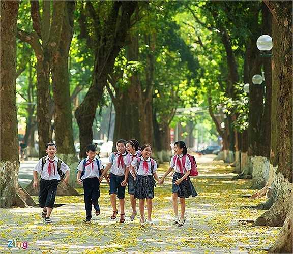 Thảm lá vàng dưới chân, bóng rợp xanh trên đầu giữa mùa hè khiến lòng người nhẹ nhàng, sảng khoái mỗi khi dạo bước qua đây.