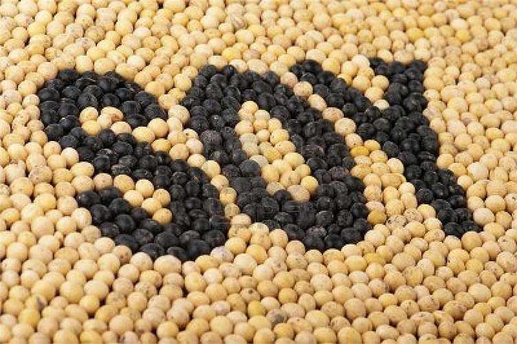Đậu nành là một thực phẩm lành mạnh giúp giảm cholesterol, kiểm soát và duy trì huyết áp ổn định.