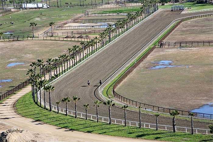 Trang trại có một đường đua dài 1.200m