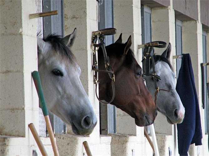 Ngoài ra còn có tới 5 chuồng ngựa