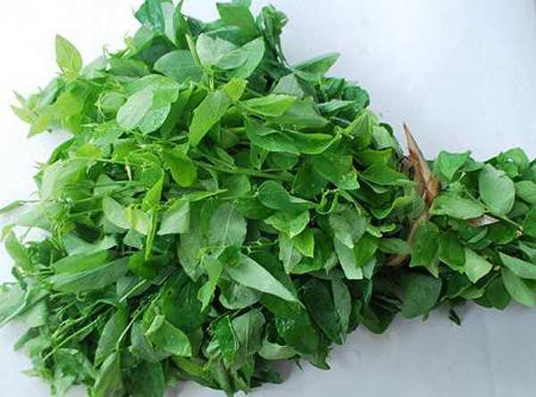 Rau ngót: Trong rau ngót chứa Papaverin, có tác dụng giãn cơ trơn của mạch máu để giảm đau, hạ huyết áp. Nếu sử dụng một lượng rau ngót tươi hơn 30mg thì có thể gây co thắt tử cung và dễ dẫn đến sảy thai.