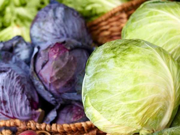 Nếu bạn không muốn ăn cải xoăn thì bắp cải có thể là một sự lựa chọn thay thế hữu hiệu. Tuy cải bắp không giàu vitamin K như cải xoăn nhưng chỉ cần ăn một nửa chén bắp cải là có thể cung cấp đủ lượng Vitamin K trong ngày.