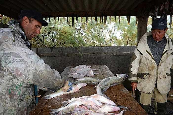 Những con cá sông được chế biến tạm thời