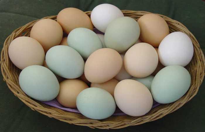 Ăn tỏi với trứng rất độc: Trứng là một loại thực phẩm có giá trị dinh dưỡng rất cao, giúp bồi bổ sức khoẻ, và là món ăn thường xuyên trong các bữa ăn của mọi gia đình. Tuy nhiên nếu tráng trứng với tỏi sẽ rất độc.