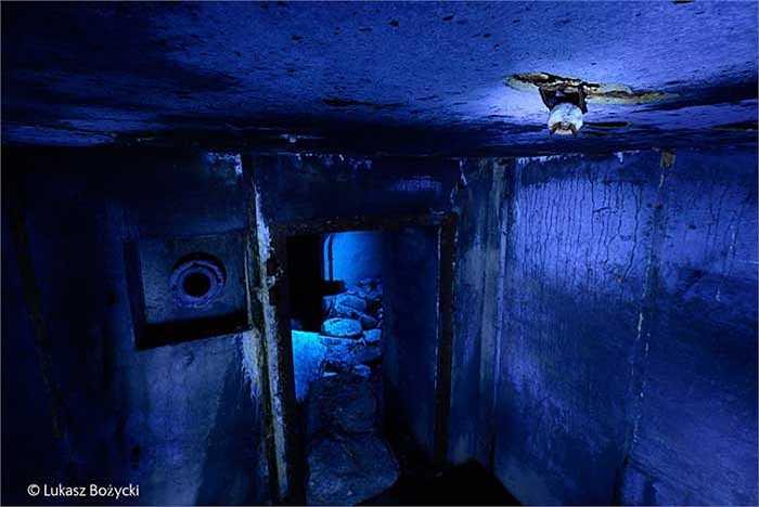 'Winter hang – out': Lukasz Bozycki đã chớp được cảnh dơi treo ngược trần nhà trong một đêm lạnh giá tháng 1 trong căn hầm trú ẩn bỏ hoang tại Đức từ Chiến tranh Thế giới II. Những tàn tích của chiến tranh đã trở thành nơi ở cho các loài sinh vật hoang dã.