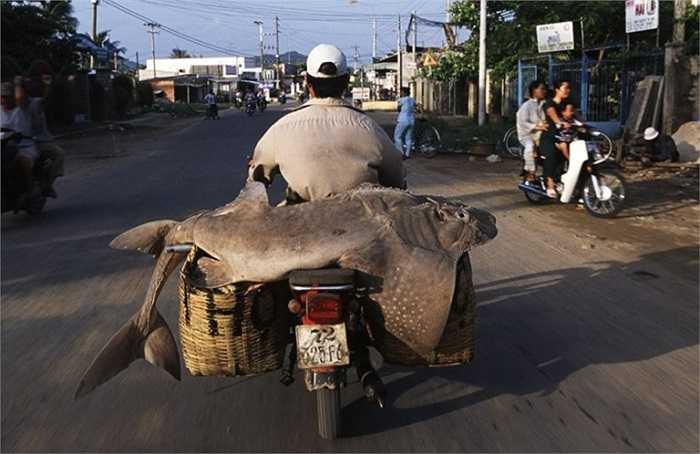 Một ngư dânh chở cá trên xe của mình. (Nguồn ảnh: Tổng hợp từ Internet)