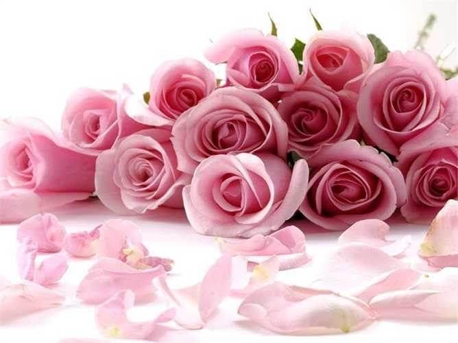 11. Tinh dầu hoa hồng nổi tiếng với đặc tính xoa dịu thần kinh, giảm căng thẳng, chống trầm cảm, chống viêm, diệt khuẩn, giải độc gan, làm đẹp da và giảm đau cơ bắp khi được dùng để xoa bóp cơ thể.