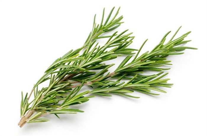 5. Mùi hương của tinh dầu có trong cây hương thảo có thể cải thiện sự tập trung, tăng tốc độ và độ chính xác trong các nhiệm vụ liên quan đến thần kinh. Kết luận này được rút ra từ một nghiên cứu tại Đại học Northumbria tại Anh.