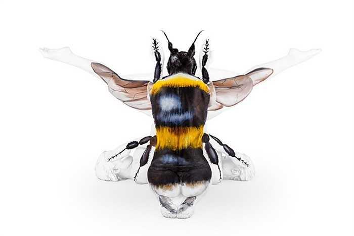 Ong mật đậu trên lưng