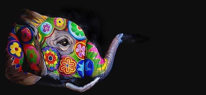 Chú voi sặc sỡ