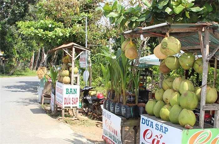 Trà Vinh được xem là nơi trồng nhiều dừa sáp nhất miền Tây. Dọc theo quốc lộ 54 về tỉnh này, người dân treo đầy dừa sáp để bán cho khách qua đường mua về làm quà hoặc giải khát tại chỗ.