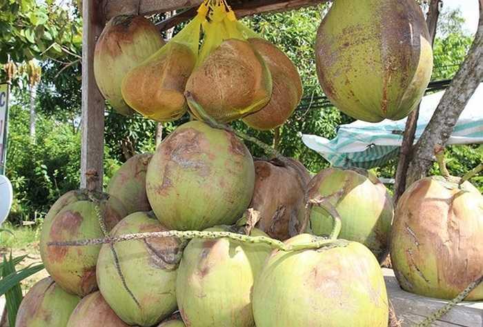 Huyện Cầu Kè được xem là 'vương quốc dừa sáp' ở Trà Vinh.