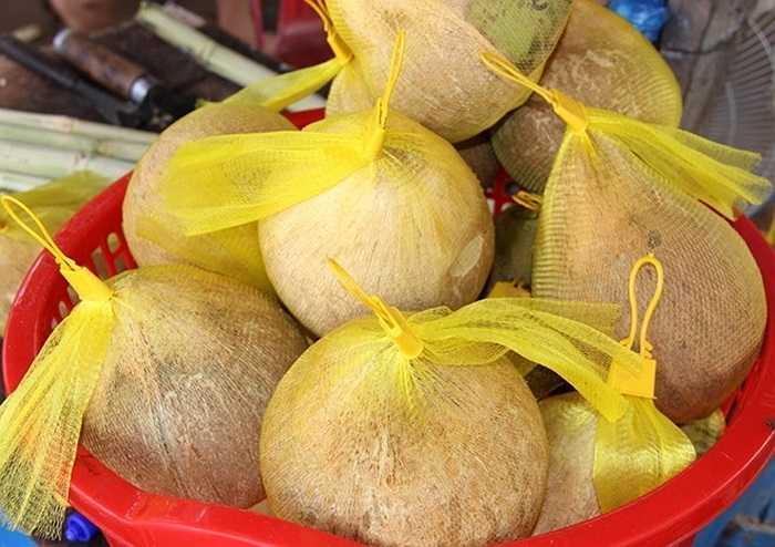 Theo nông dân Lưu Phước Thịnh ở xã Tâm Ngãi (Cầu Kè, Trà Vinh), dừa sáp trồng 3-4 năm cho trái và mỗi quầy dừa khoảng 10 trái nhưng chỉ 2-3 trái có sáp, thậm chí không có.