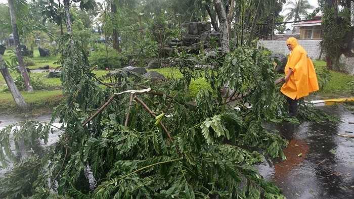 Cây cối bị gió bão quật ngã