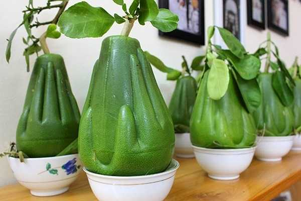 Bưởi tay Phật sẽ được xuất hiện lần đầu tiên trên thị trường Tết Nguyên Đán năm nay với giá 1 triệu đồng/quả. Số lượng loại bưởi này chỉ có giới hạn là 3000 quả nên những người thực sự muốn sử hữu vật sản đặc biệt này phải lùng tìm và đặt mua trước.