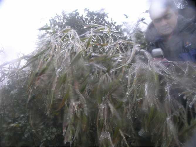 Sáng sớm nay, nhiều khu vực núi cao ở Thị trấn Sa Pa đã có băng giá phủ trắng. (Ảnh: Dân trí)