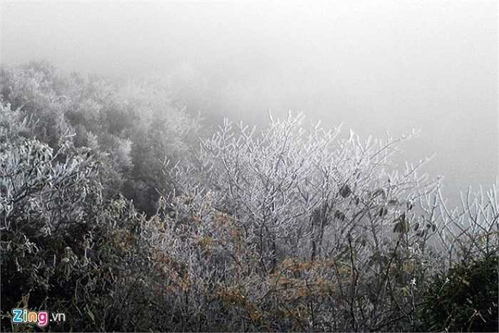 Dọc tuyến đường ở độ cao 2.800 m lên Fansipan phủ đầy màu trắng. (Ảnh: Zing)