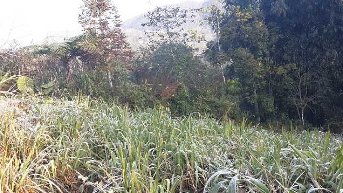 Dự báo đêm nay (18.12), khả năng sương muối tiếp tục xảy ra ở các khu vực núi cao Sa Pa. (Ảnh: Dân Việt)