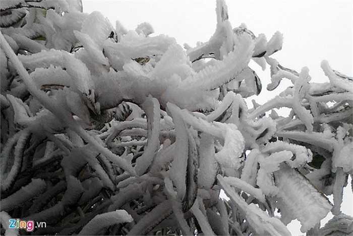 Theo Zing.vn, sáng sớm 17/12, ở độ cao 2.800m, trên đường lên đỉnh Fansipan đã xuất hiện băng giá do nhiệt độ xuống quá thấp. (Ảnh: Zing)