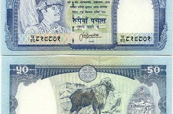 Ngoài tờ 2 USD ở Mỹ thì tờ 50 đồng của Nepal in hình con dê cũng được người chơi săn đón. Trên một số trang mạng trong nước, tờ tiền này được rao bán giá 80.000 đồng, trong khi nó chỉ tương đương với 10.000 đồng tiền Việt. Theo thông tin của người bán thì hình con dê leo núi trên tờ tiền thể hiện sự mạnh mẽ, ý chí kiên cường. Ảnh: FBNV.