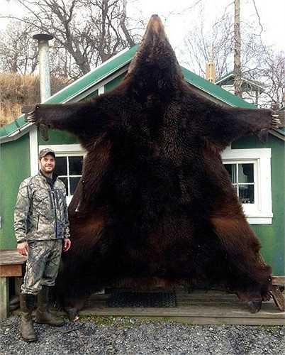 Mỗi năm có đến hơn 30.000 cá thể gấu nâu khổng lồ Alaska bị giết bởi những thợ săn chuyên nghiệp.