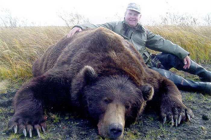 Đây là loài gấu khổng lồ, lớn nhất trong họ nhà gấu. Cá thể đực trưởng thành có trọng lượng lên tới gần 1.000 kg. Chiều dài cơ thể khi đứng của chúng cao khoảng 3m.