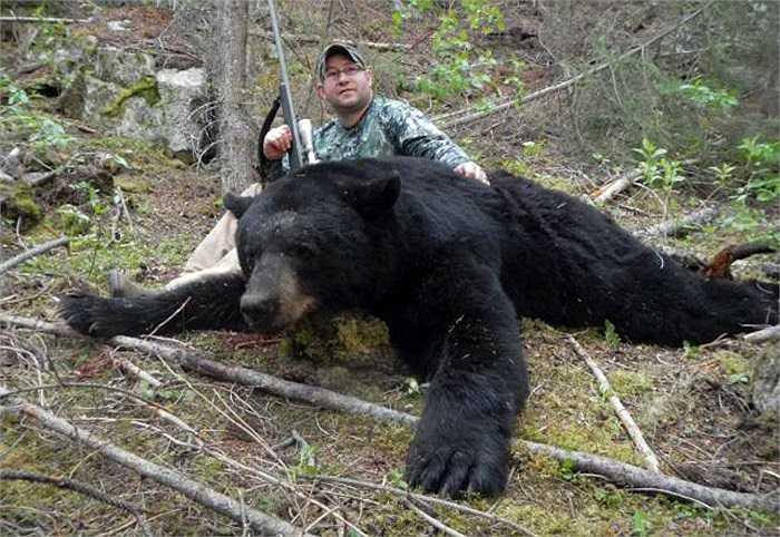 Là loài động vật phàm ăn nên gấu nâu lớn nhanh như thổi. Chỉ chừng một tháng tuổi gấu con có thể đạt trọng lượng 5 - 6kg.