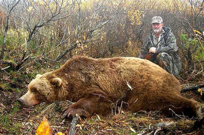 Hàng năm, chính quyền nơi đây có phép thợ săn gấu chuyên nghiệp săn bắt loài gấu này. Họ cấp thẻ, nhằm kiểm soát số lượng gấu nâu bị giết hạ trong năm.