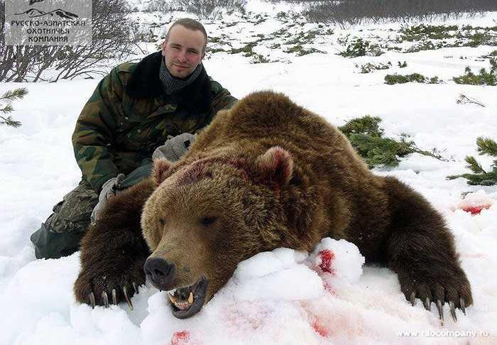 Trong vòng hơn 100 năm qua, có duy nhất 3 trường hợp ghi nhận bị gấu nâu tấn công tại Scandinavia, đều là do con người cố tình trêu chọc chúng.