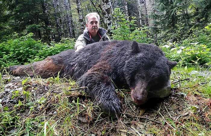 Tuy có cơ thể khổng lồ, song vận tốc di chuyển của chúng thật đáng nể. Khi đuổi bắt con mồi, gấu nâu có thể chạy với vận tốc gần 70km/h.