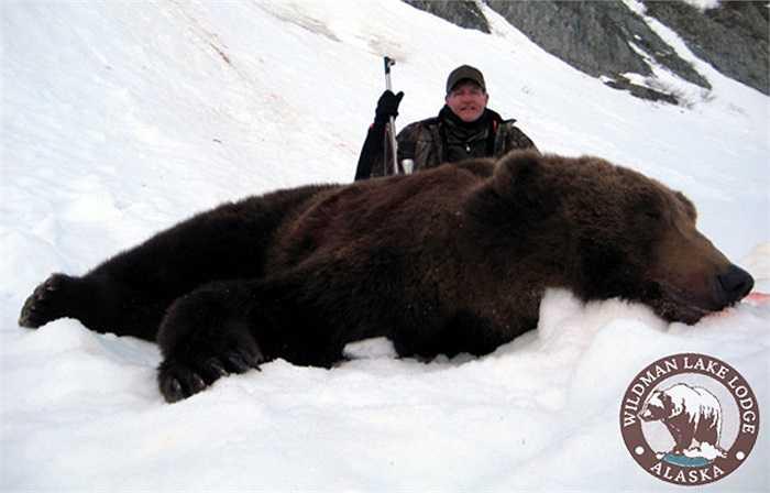 Mùa hè là thời điểm gấu nâu nạp năng lượng để tạo mỡ. Lớp mỡ dưới da của gấu nâu có thể lên tới 200kg. Lớp mỡ dày giúp cơ thể chúng giữ ấm và tiêu hao dần vào mùa đông.