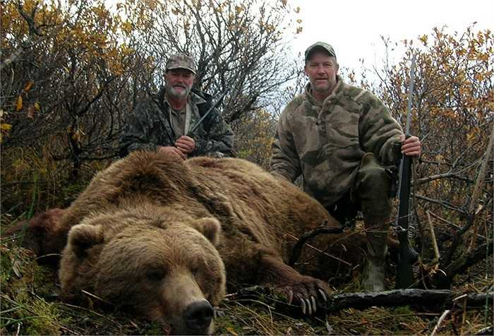 Chúng không thực sự ngủ đông như nhiều loài gấu xứ lạnh khác.