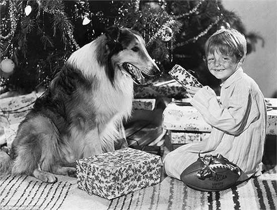 Cậu bé chụp ảnh cùng chú chó cưng bên cây thông Noel năm 1947