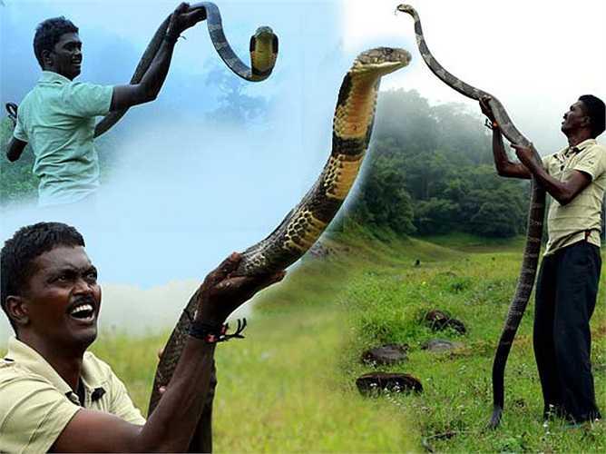 Lần đầu tiên Vava Suresh giải cứu một chú rắn hổ chúa khi anh mới 12 tuổi. Cậu bé đem chúng về nhà, nuôi dưỡng và dành cả ngày để theo dõi tập tính của con rắn. Cậu bé đã biết cách chơi với rắn và không bị chúng cắn.
